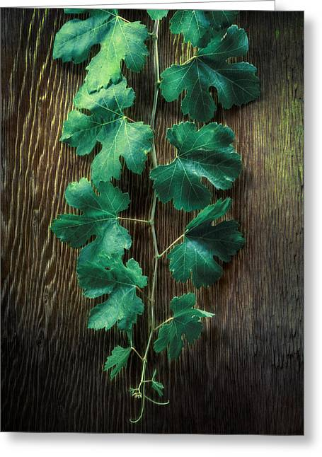 Grape Leaves Greeting Card by YoPedro