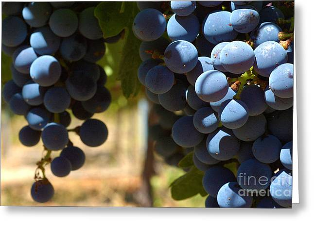 Grape Vines Greeting Cards - Grape Vine 3 Greeting Card by Micah May