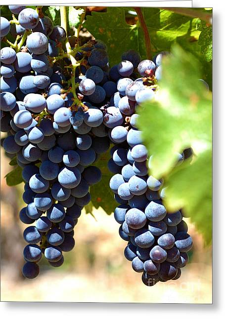 Grape Vines Greeting Cards - Grape Vine 5 Greeting Card by Micah May