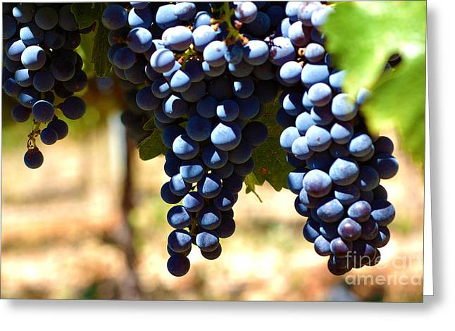 Grape Vines Greeting Cards - Grape Vine 6 Greeting Card by Micah May