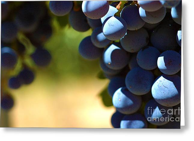 Grape Vines Greeting Cards - Grape Vine 7 Greeting Card by Micah May