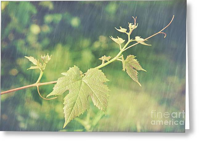 Grape Leaves Photographs Greeting Cards - Grape vine against summer background Greeting Card by Sandra Cunningham
