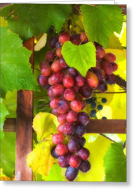 Grapevines Greeting Cards - Grape Vine Greeting Card by Utah Images