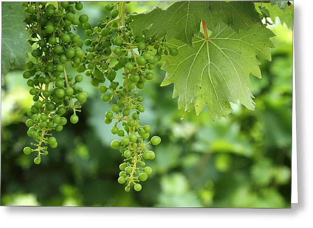 Vines Greeting Cards - Green Bunches Greeting Card by Brian Manfra