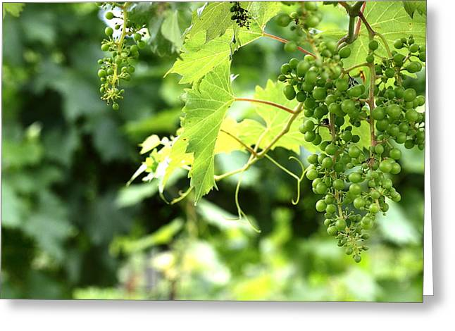 Winery Greeting Cards - Lucious Grapes Greeting Card by Brian Manfra