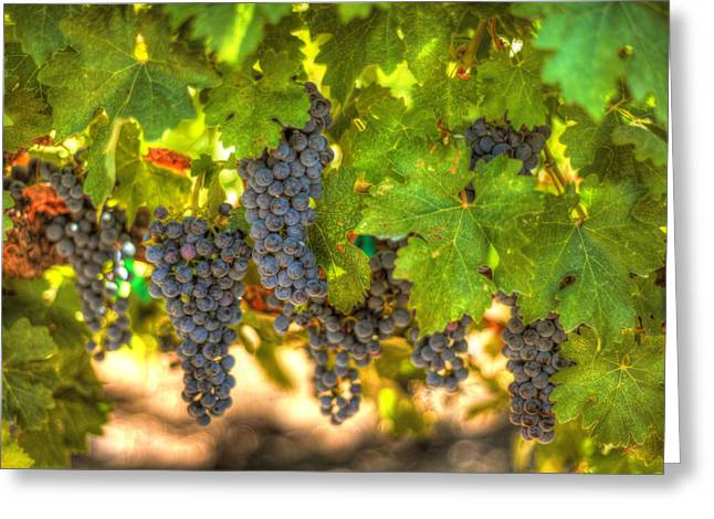 Grapevines Greeting Cards - Grapes 7 Greeting Card by Brad Kazmerzak