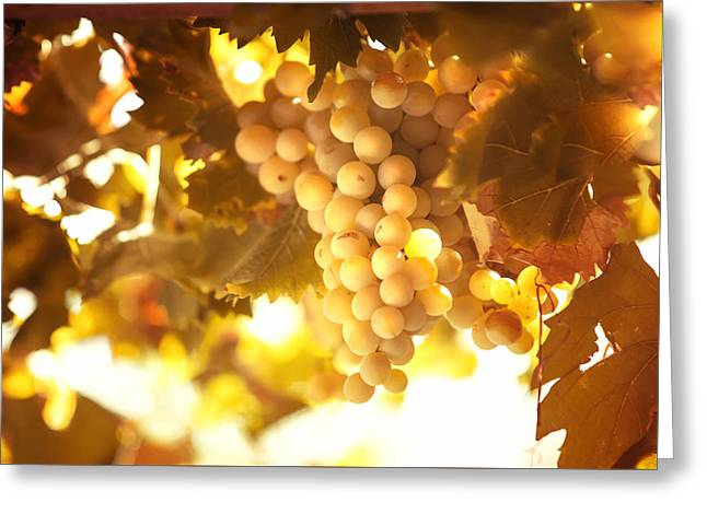 Grapevine Autumn Leaf Greeting Cards - Grapes Filled with Sun Greeting Card by Jenny Rainbow