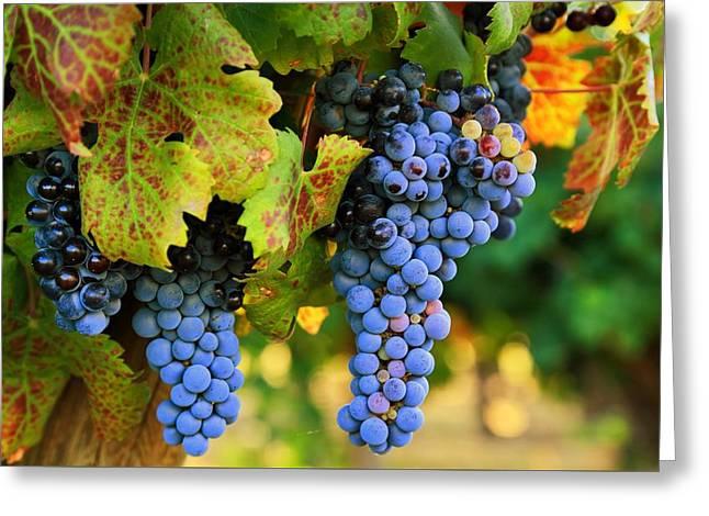 Grapes Grapes Grapes Greeting Card by Lynn Hopwood