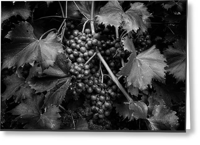 Fruit And Wine Greeting Cards - Grapes in Black and White Greeting Card by Greg Mimbs