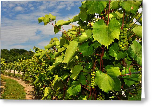 Blue Grapes Greeting Cards - Grapes in the Michigan Vineyard Greeting Card by Diane Lent
