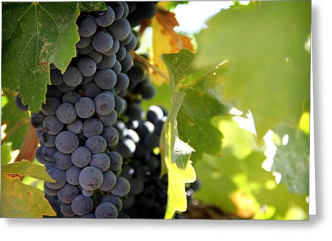 Grapes Greeting Card by Nancy Ingersoll