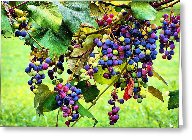 Colorful Photography Greeting Cards - Grapes of Wrath Greeting Card by Karen M Scovill