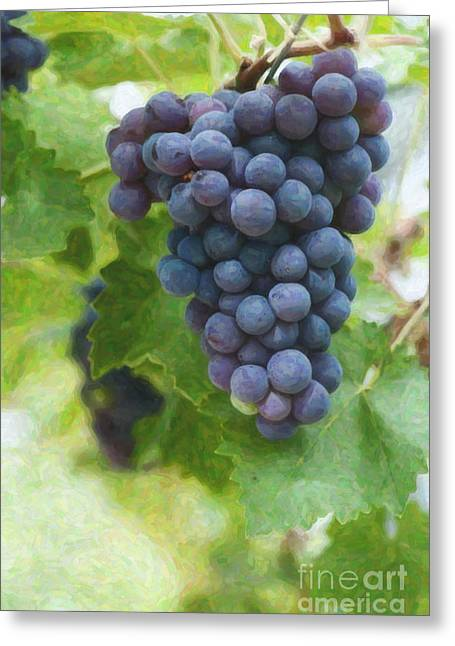 Grapes On The Vine Greeting Card by Tim Gainey