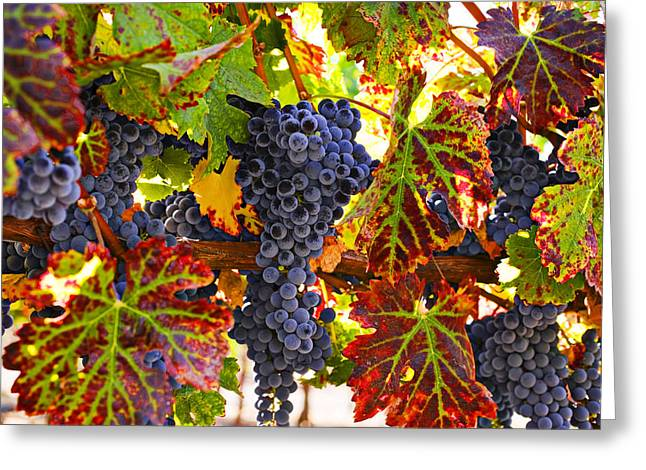 Wines Greeting Cards - Grapes on vine in vineyards Greeting Card by Garry Gay
