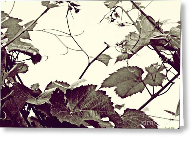 Grapevine In Sepia 2 Greeting Card by Sarah Loft