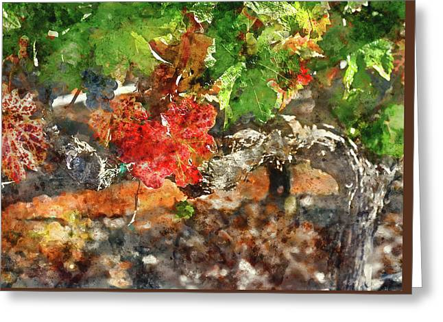Grapevine In The Autumn Season Greeting Card by Brandon Bourdages