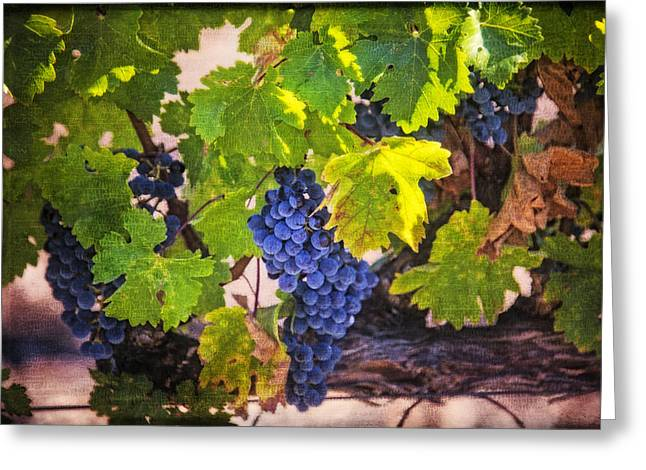 Napa Valley Greeting Cards - Grapevine With Texture Greeting Card by Garry Gay