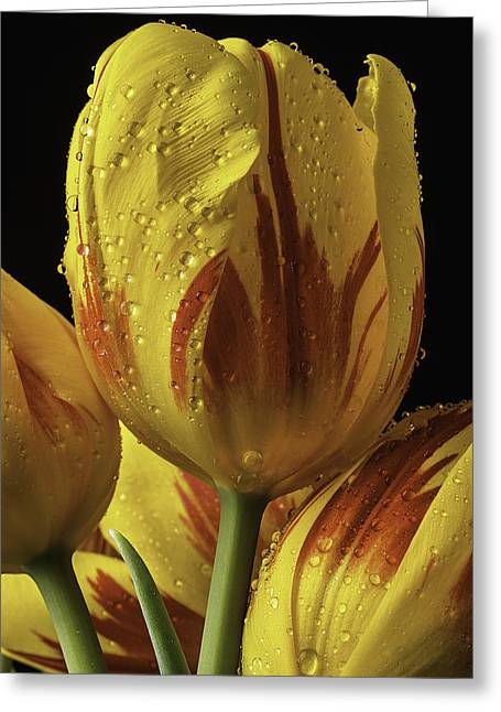 Rain Drop Greeting Cards - Graphic Tulip Greeting Card by Garry Gay