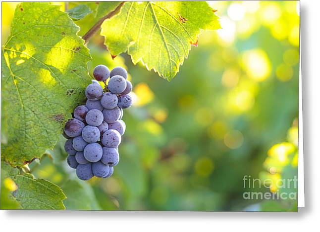 Beaujolais Greeting Cards - Grappe for wine Greeting Card by Gael Fontaine