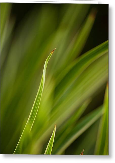 Grass Abstract 2 Greeting Card by Mike Reid