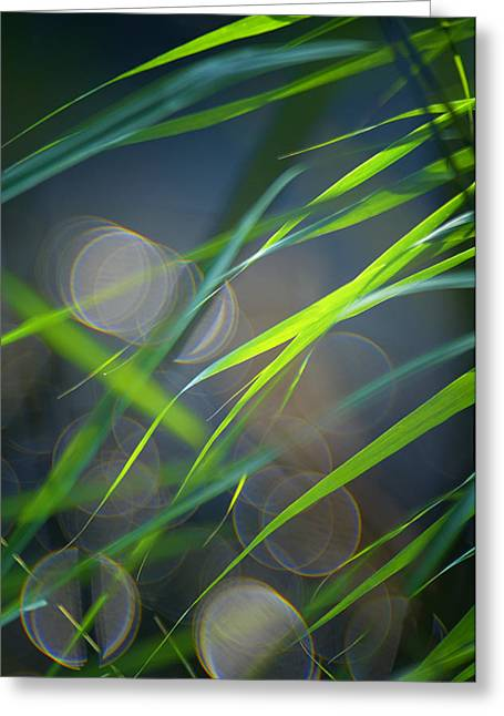Decorativ Photographs Greeting Cards - Grass and Evening Light Greeting Card by Silke Magino