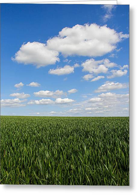 Field. Cloud Greeting Cards - Grass meets sky Greeting Card by Peggy Berger