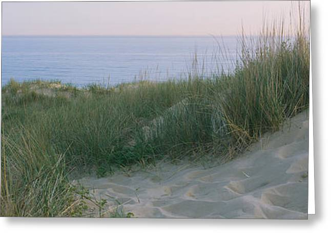 Grass On A Sand Dune, Indiana Dunes Greeting Card by Panoramic Images