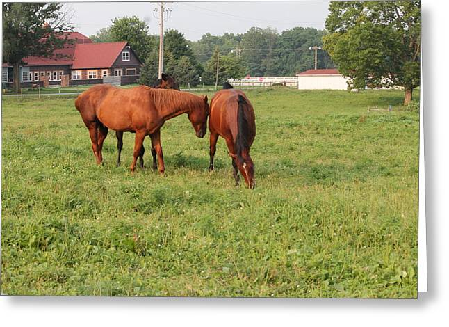 Race Horse Greeting Cards - Grass Picker Greeting Card by Minnie Davis
