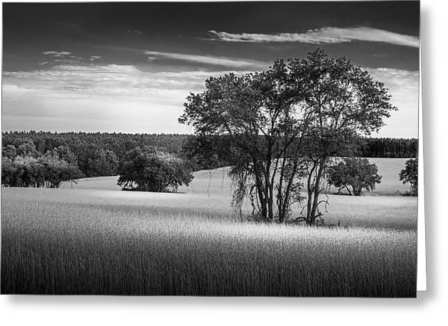 Fence Line Greeting Cards - Grass Safari-bw Greeting Card by Marvin Spates