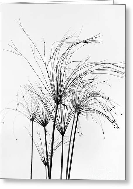 Aquatic Greeting Cards - Grasses in the Wind Greeting Card by ArtissiMo Photography