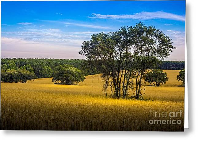 Fence Line Greeting Cards - Grassland Safari Greeting Card by Marvin Spates