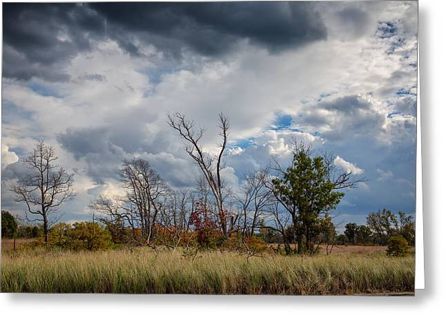 Grasslands At Indiana Dunes Greeting Card by John Bailey