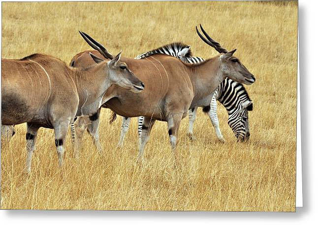 Drive Through Greeting Cards - Grasslands Greeting Card by Laura Mountainspring