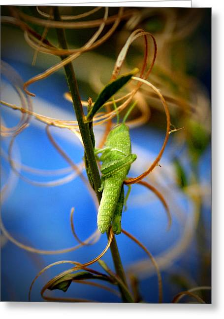 Grassy Hopper Greeting Card by Chris Brannen