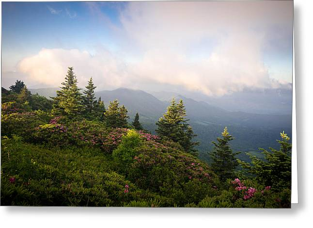 Tn Greeting Cards - Grassy Ridge Rhododendron Bloom Greeting Card by Serge Skiba