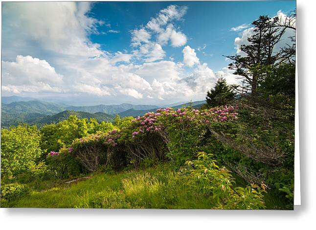 Dave Greeting Cards - Grassy Ridge Roan Highlands Rhododendrons on the Appalachian Trail Greeting Card by Rick Dunnuck