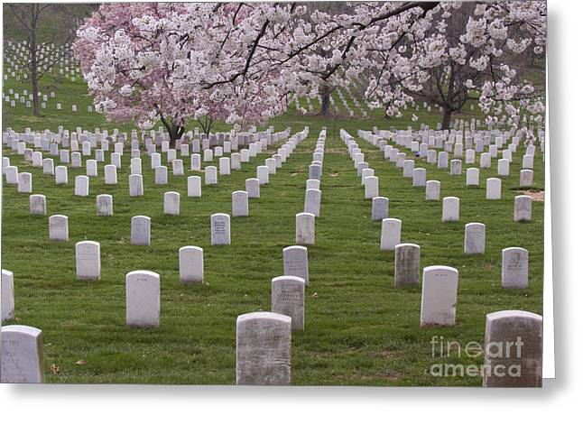 Graves Of Heros In Arlington National Cemetery Greeting Card by Tim Grams