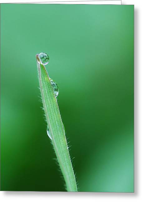 Green Blade Of Grass Greeting Cards - Gravity Defied Greeting Card by Donna Blackhall