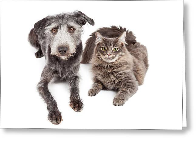 Domestic Animal Greeting Cards - Gray Cat and Crossbreed Dog Greeting Card by Susan  Schmitz