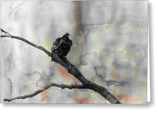 Turkey Buzzard Greeting Cards - Gray Day Vulture Greeting Card by Gothicolors Donna Snyder