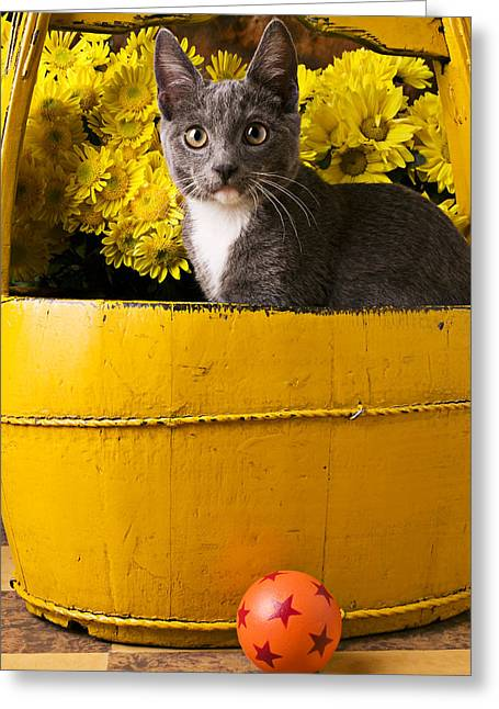 Domestic Pets Greeting Cards - Gray kitten in yellow bucket Greeting Card by Garry Gay