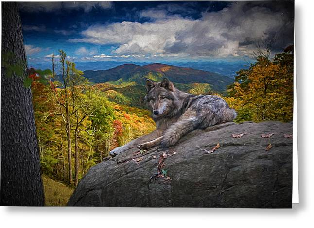 Gray Wolf In Autumn Greeting Card by John Haldane