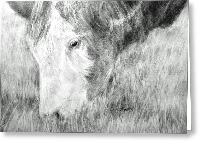 Steer Drawings Greeting Cards - Graze Greeting Card by Meagan  Visser