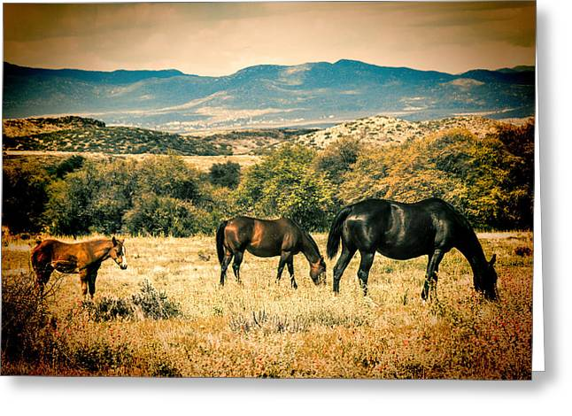 Landscape Posters Greeting Cards - Grazing Greeting Card by Fred Larson