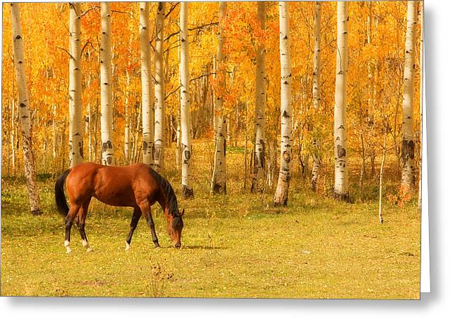 The Lightning Man Greeting Cards - Grazing Horse in the Autumn Pasture Greeting Card by James BO  Insogna