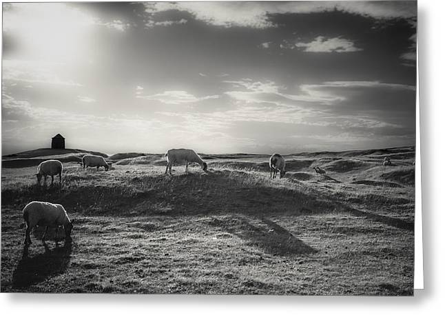White Photographs Greeting Cards - Grazing in the sunlight Greeting Card by Chris Fletcher