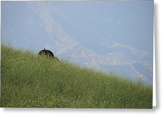 Horse In Field Greeting Cards - Grazing Greeting Card by Liz Vernand