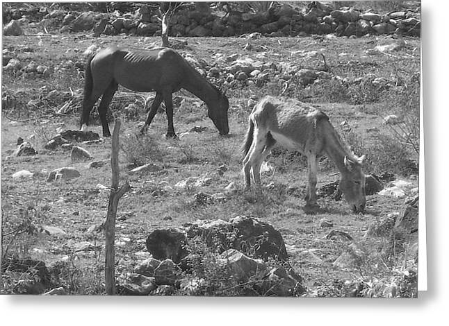 Grazing Greeting Card by Michael Peychich