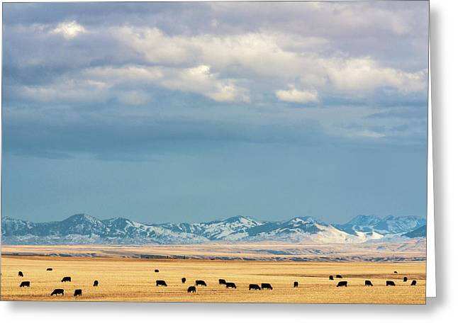 Beautiful Scenery Greeting Cards - Grazing Near Highwood Greeting Card by Todd Klassy