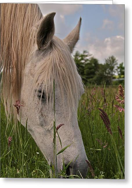 Ground Level Photographs Greeting Cards - Grazing Greeting Card by Odd Jeppesen